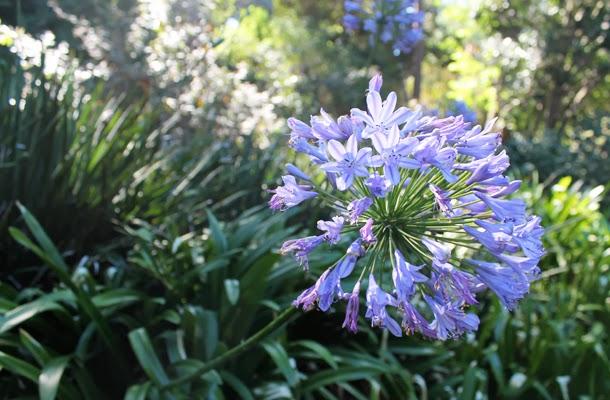 Botanical Gardens, South Yarra