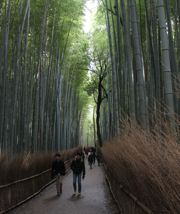 Kyoto, Japan, Bamboo Grove