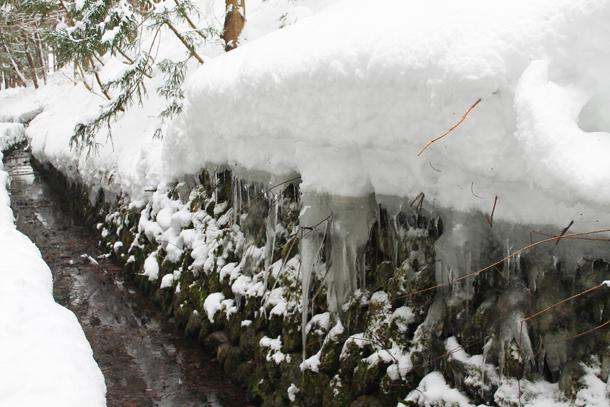 Snow Monkey Park, Snow Monkeys, Nagano, Japan