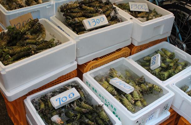 Sweet Monday, Tokyo, Japan, fresh wasabi, fish market, tsukiji