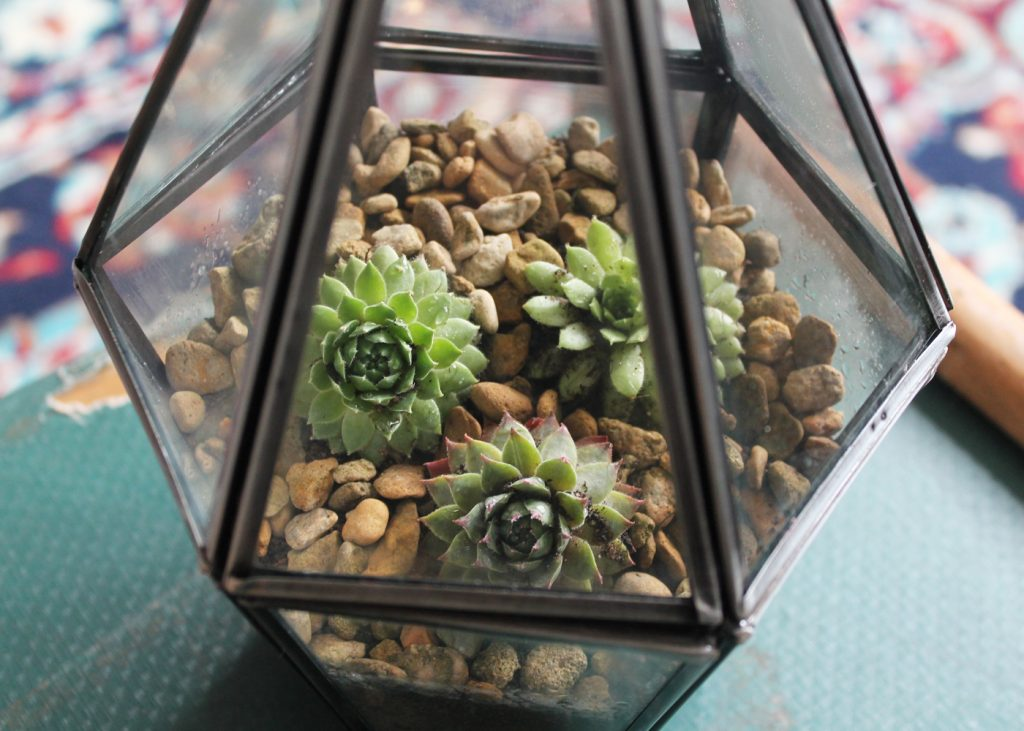 DIY terrarium